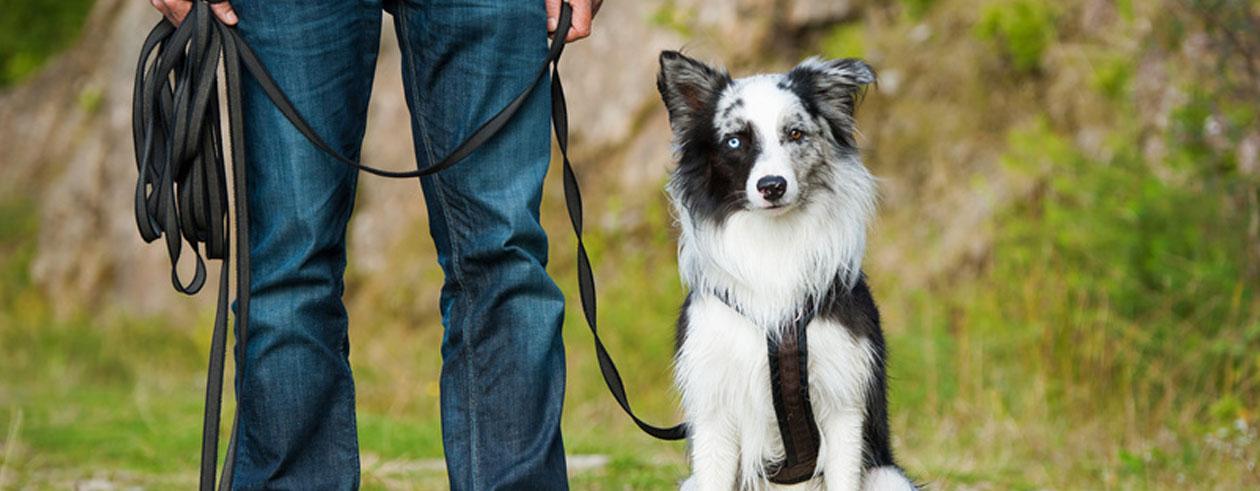 leinenpflicht-hund-wandern