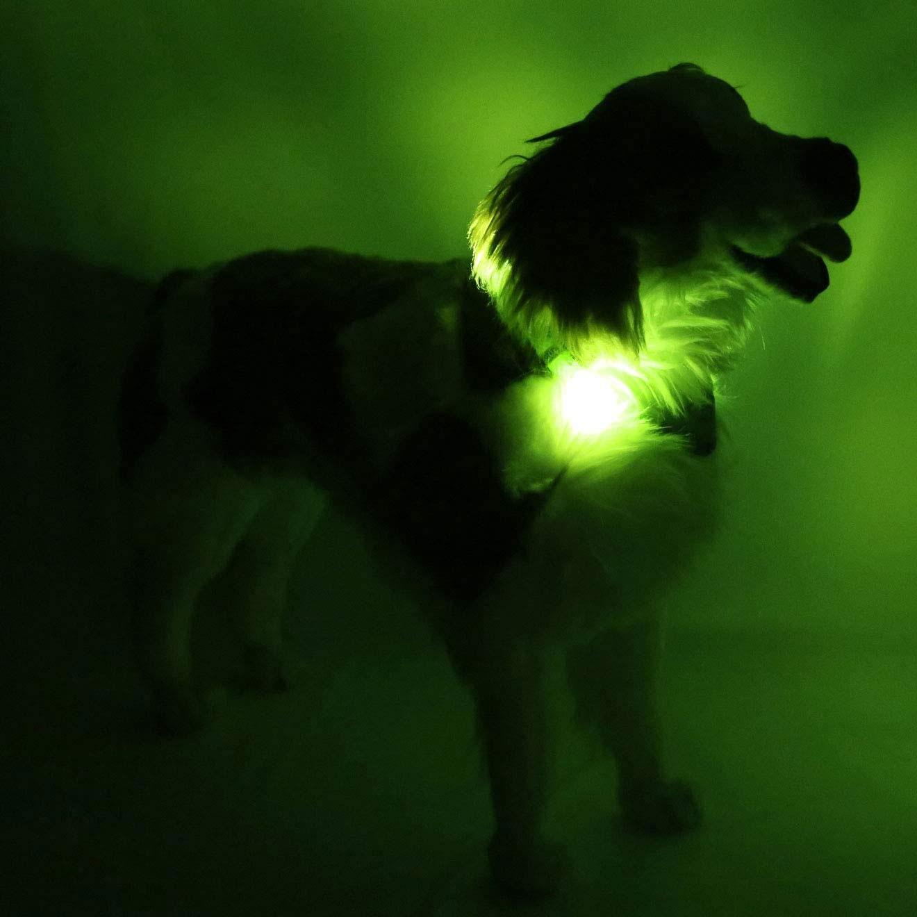 leuchtie-leuchthalsband