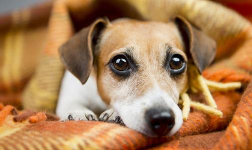 hundebett-parasiten-reinigen
