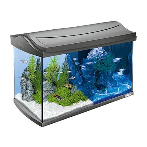tetra aquarium set led discover line 60 liter g nstig im. Black Bedroom Furniture Sets. Home Design Ideas