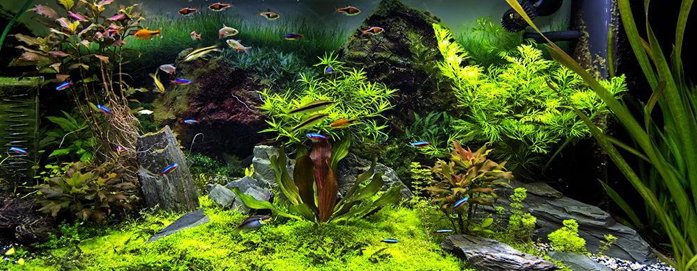 Aquarium kaufen - Aquarien für Fische & Pflanzen im Shop