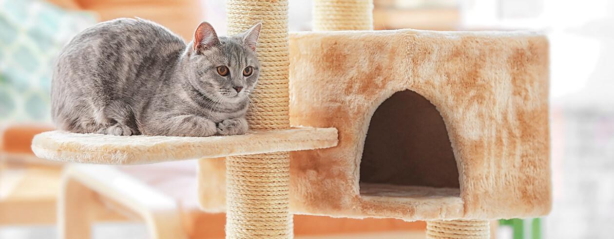 <strong>Katzenmöbel</strong> - Mehr Platz für Ihre Katze