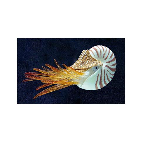 aquarium deko floating nautilus gp 1012 g nstig im online shop kaufen. Black Bedroom Furniture Sets. Home Design Ideas