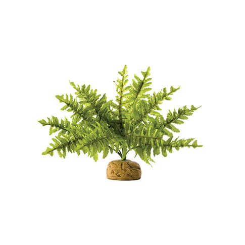 Exo Terra Boston Fern S