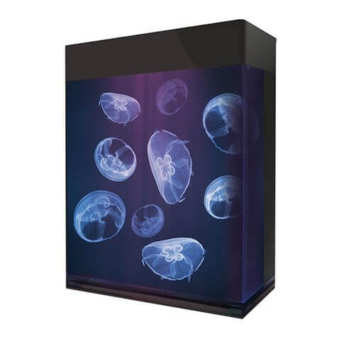 Amazonas Jellyfish Aquarium transparent