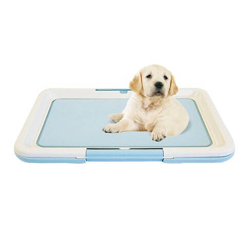 Puppy Welpen WC medium