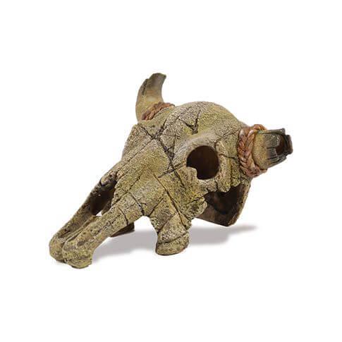 Amazonas Büffel-Skelett