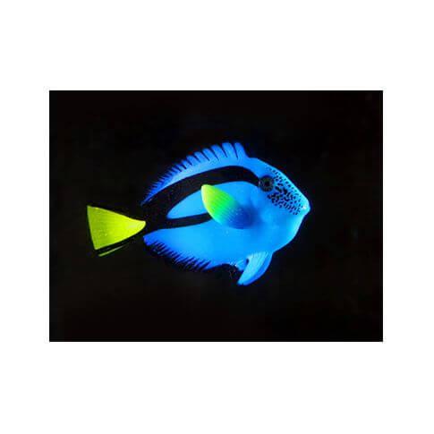 Aquarium-Deko Floating Dr Fisch