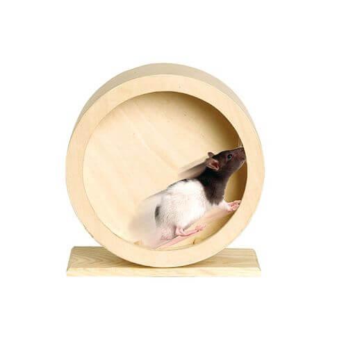 Holzlaufrad Roundy