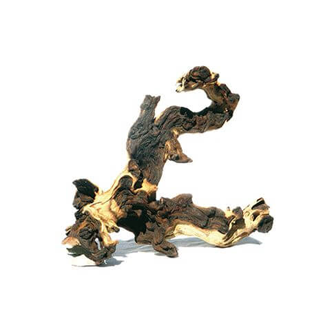 Holzwurzel Mopani