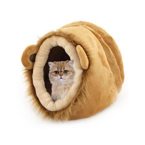 Katzenhöhle Löwenoptik