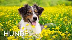 ew-apotheke-hund
