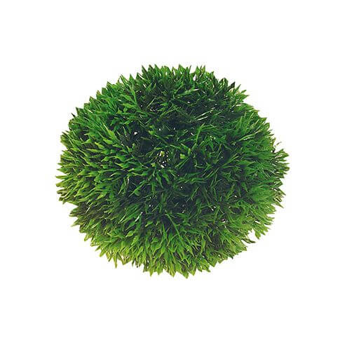 Kunststoffpflanze Plant Ball