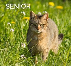 josera-shortcut-verlinkung-senior