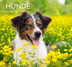 link-hunde-furminator