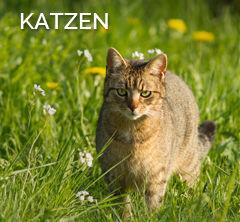 link-katze2
