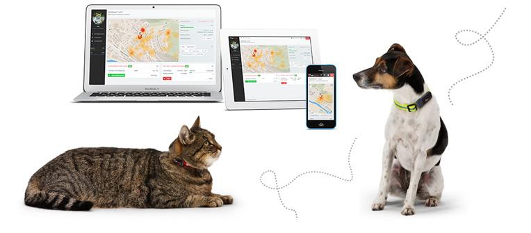petpointer-tracking