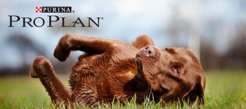 pro-plan-hunde2