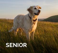 senior-wolfsblut