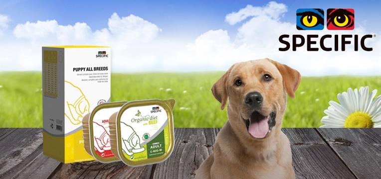 specific-hundefutter-nassfutter-emotionsbild