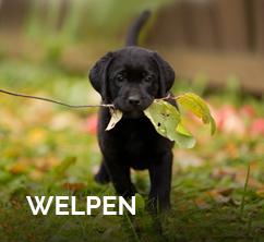 welpen-wolfsblut